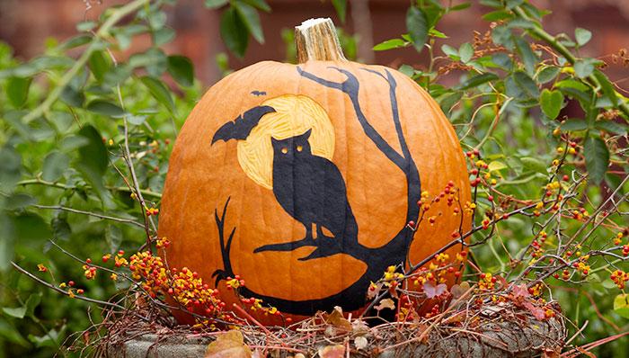 4-12-no-carve-painted-pumpkins