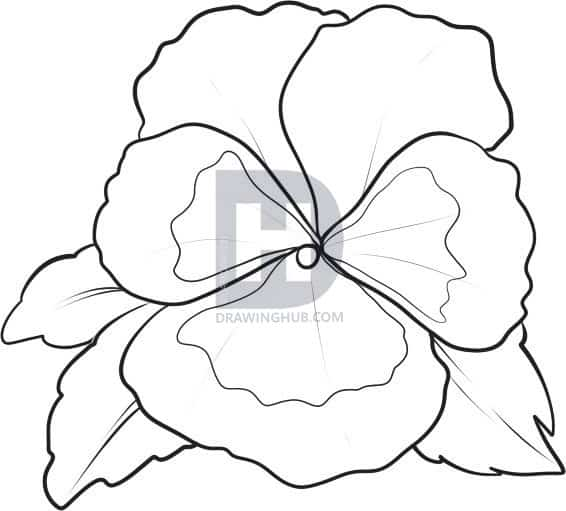 how to draw a pansy