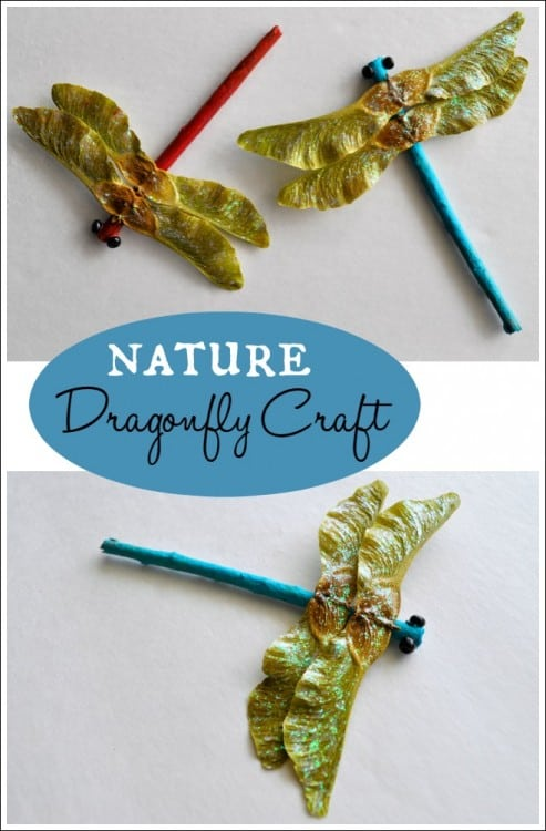 Nature dragonfly craft
