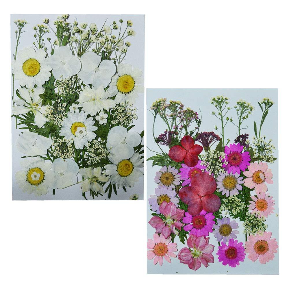 amazon pressed flowers