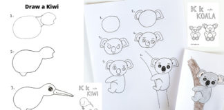 how to draw a kiwi and koala
