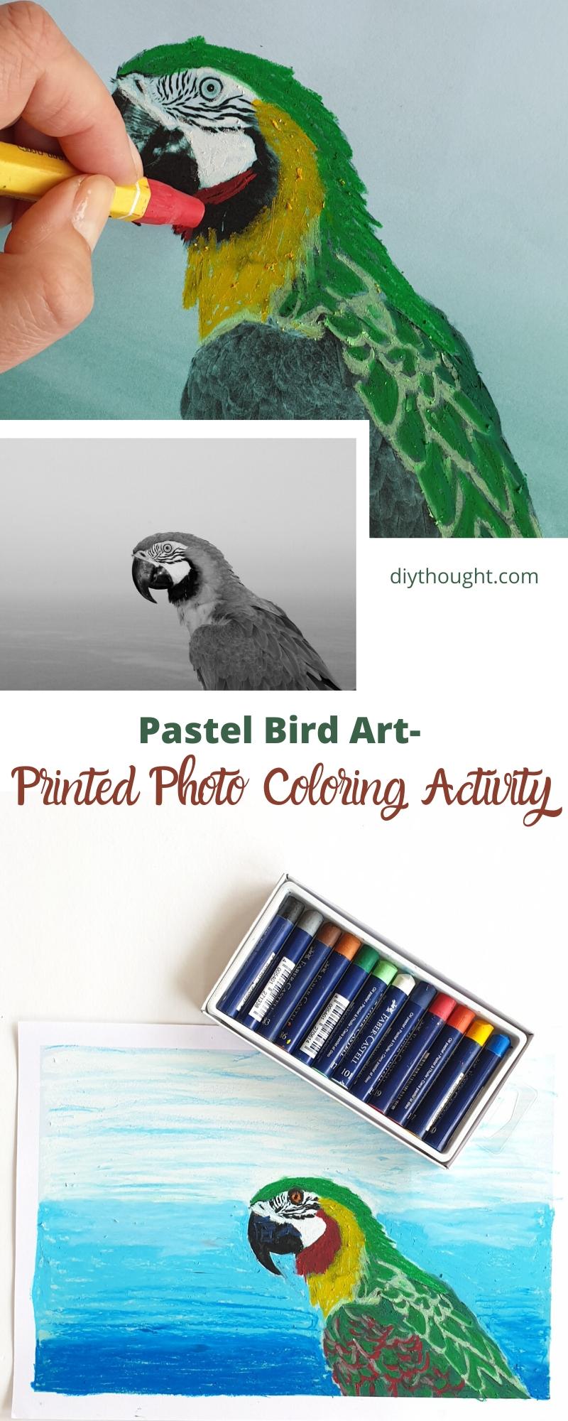 pastel bird art activity