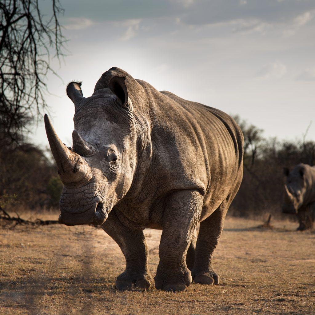 rhino day