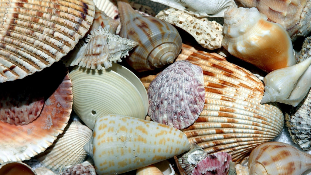 crafty days in june- shells