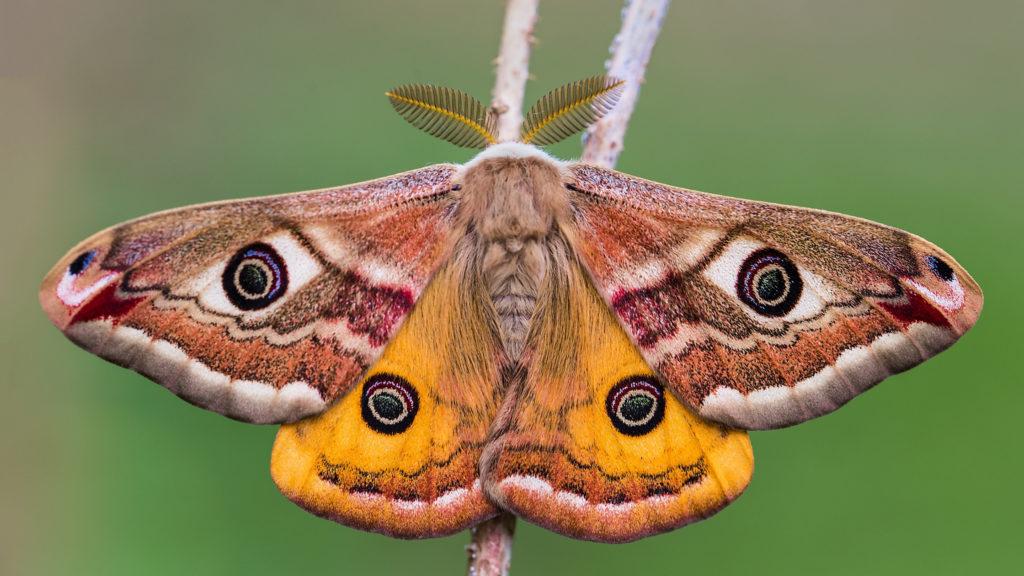 Crafty days in July- Moth