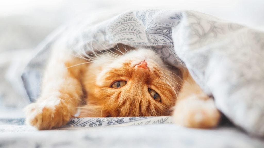 Crafty days in August- cat day